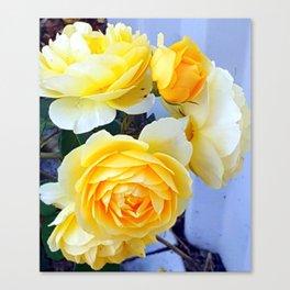 The perfect lemon rose Canvas Print
