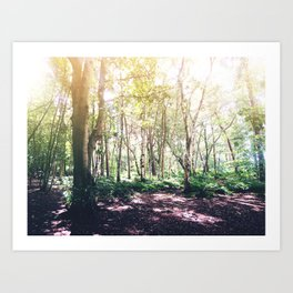 Dappled Forest Art Print