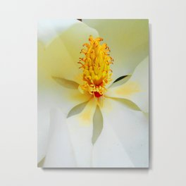 Heart of the Magnificent Magnolia Metal Print