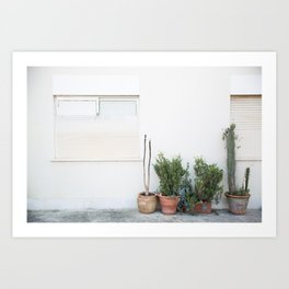 Potted Plants Art Print