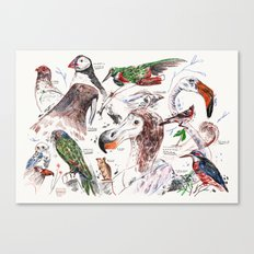 Birds and other animals Canvas Print