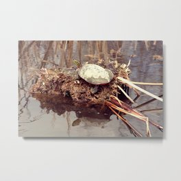 Painted Turtle Sunning on a Mud Flat Metal Print