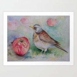 Fieldfare Bird with red apple Wildlife Songbird Illustration Art Print