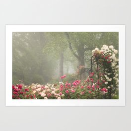 Blooms in Fog II Art Print