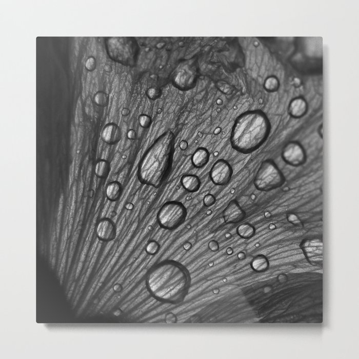 water drops macro XI Metal Print