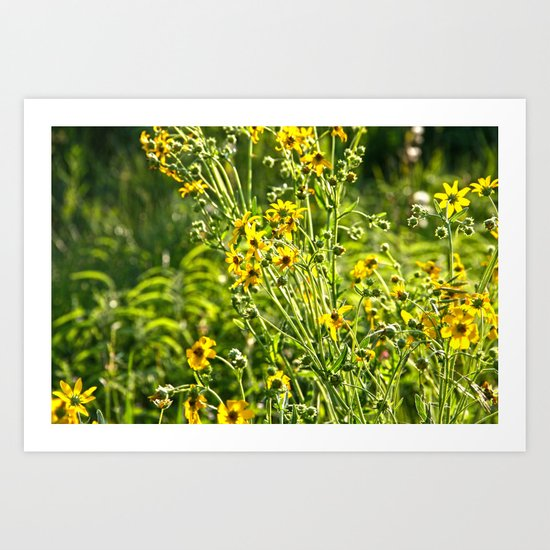 Wild Sunshine Art Print
