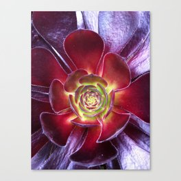 Red Succulent Canvas Print