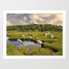 The Japanese Cranes of the Hokkaido Wetlands Art Print