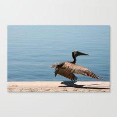 Pelican Take Off  Canvas Print