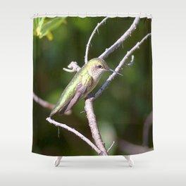 Watercolor Bird Broad-Tailed Hummingbird 03, Estes Park, CO Shower Curtain