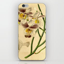 Papilionanthe teres (as syn. Vanda teres) iPhone Skin