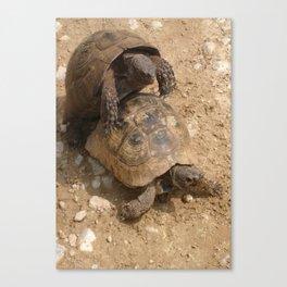 Slow Love - Tortoises Canvas Print