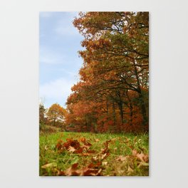 falling of leaves Canvas Print