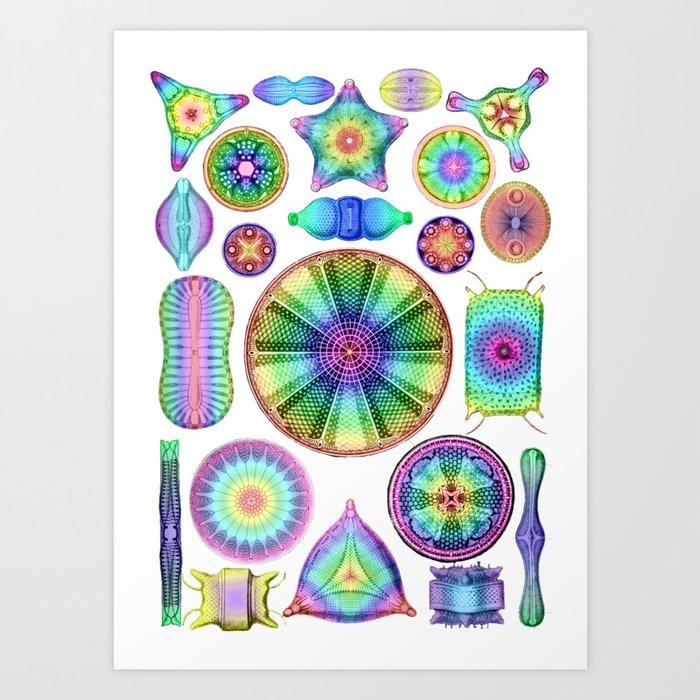 Ernst Haeckel Rainbow Diatoms Kunstdrucke