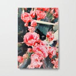 closeup blooming red cactus flower texture background Metal Print
