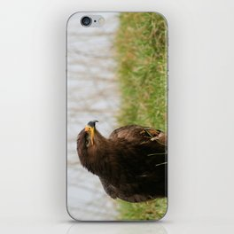 Young Common Buzzard iPhone Skin