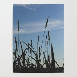 Green reeds large leaves Poster