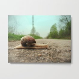 Snail on the road Metal Print