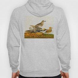 Grey plover John Audubon vintage scientific bird illustration Hoody