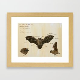 The Eastern Pipistrelle Bat Anatomy Framed Art Print