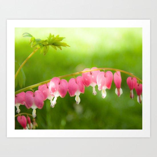 My Heart on a String.  Bleeding Heart Flower Photo.  Pink. Art Print