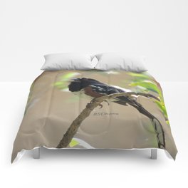 Spotted Towhee Scopes the Oak Grove Comforters