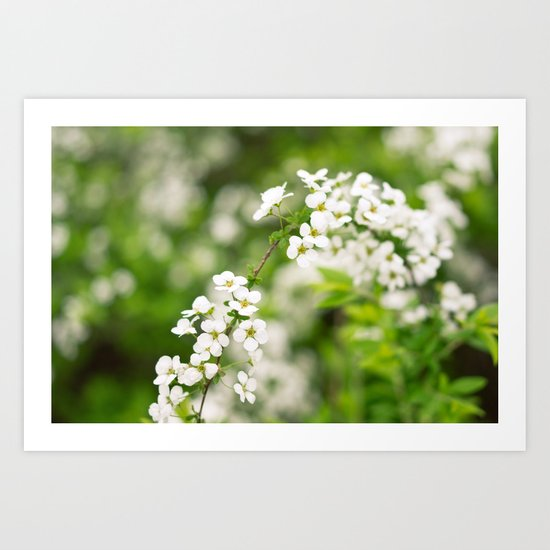 Snow Willow Art Print