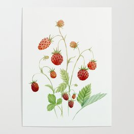 Wild Strawberries Poster
