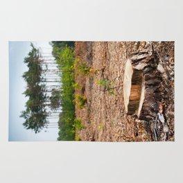 Woods logging one stump after deforestation Rug