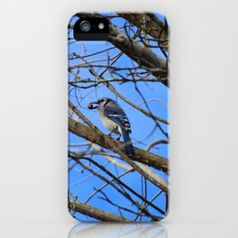Blue Jay With Acorn iPhone Case