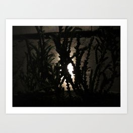 Nighttime in the Garden, 1 Art Print