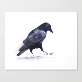 Crow #2 Canvas Print