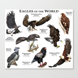 Eagles of the World Canvas Print