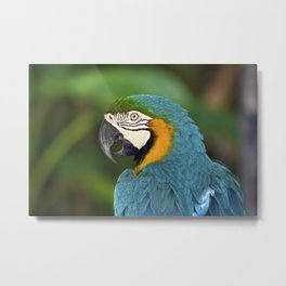 Polly Wanna Cracker?  Metal Print