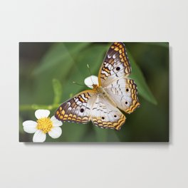 Furry Butterfly Metal Print