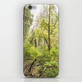 Schrader Old Growth Forest iPhone Skin