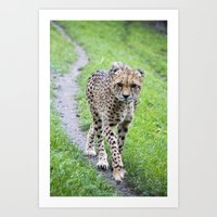 jaguar Art Prints featuring Jaguar by Veronika
