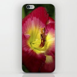 Rich red daylily Joan Derifield iPhone Skin