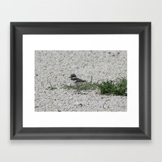 Baby Killdeer Framed Art Print