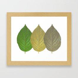 Leaf Getting Old Framed Art Print