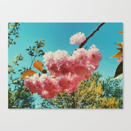 Spring Flowers in D.C. Canvas Print