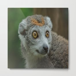Female Crowned Lemur Metal Print