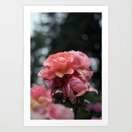 Roses and Raindrops: Peach Art Print