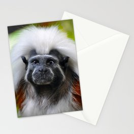 Tamarin Stationery Cards