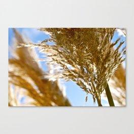 Biarritz Beach Grass Canvas Print
