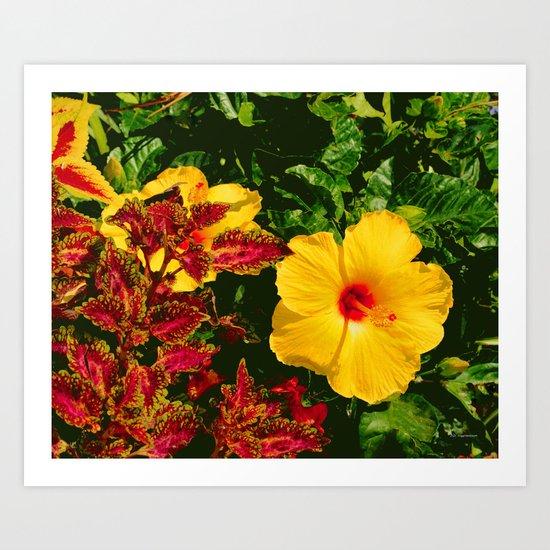 Hibiscus and Coleus Art Print