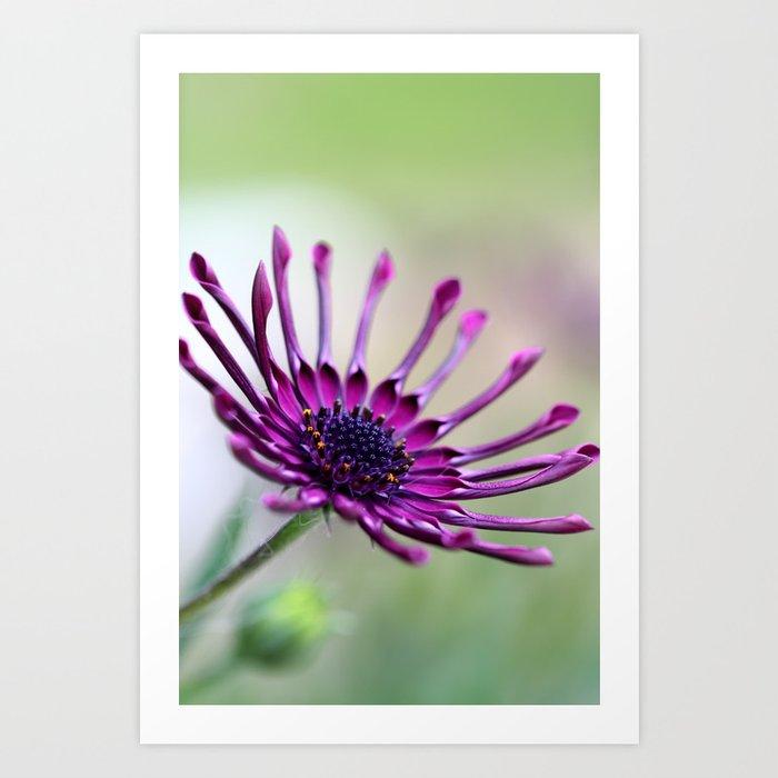 vibrant purple flower Art Print