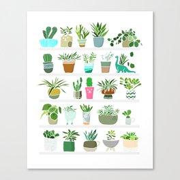 Plants on shelves. Canvas Print