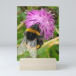 BEE ON KNAPWEED FLOWER Mini Art Print