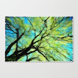 Sunny Canopy Top Canvas Print